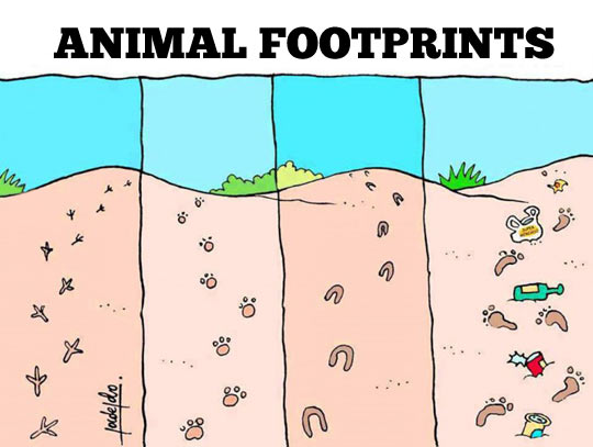funny-animal-beach-dirty-footprints